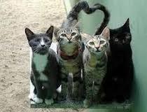 Nessuno sfratto per i gatti di Porta Portese. Arriva il finanziamento