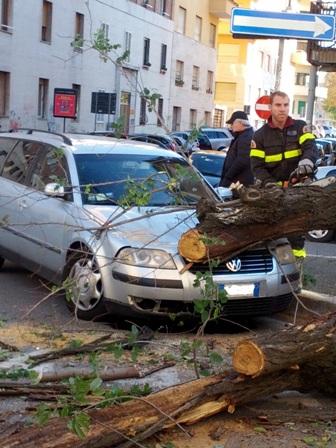 Cade albero al Flaminio