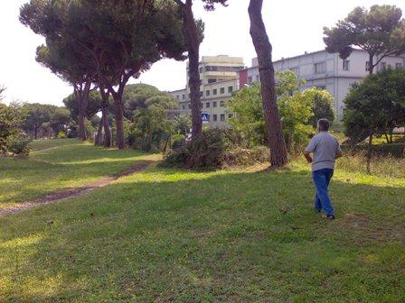 Intervenire sugli alberi di via Tiburina-Rosaccio