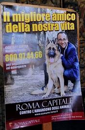 Attivo a Roma il numero verde 800.97.44.66 contro l'abbandono degli animali