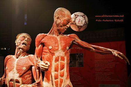 Body Worlds, il corpo umano in mostra