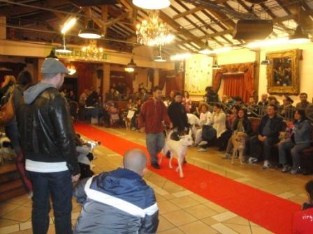 Cani Fantasia Show a Tor Tre Teste