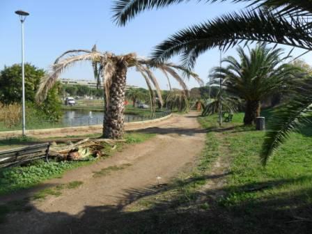 La devastazione del viale di palme di fronte al laghetto di via Tovaglieri