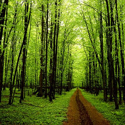Seicento nuovi alberi piantati da scuole e cittadini per for Piante da sottobosco