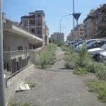 via della Saggina  erbe infestanti