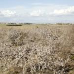 Visita Morena vasta area agricola