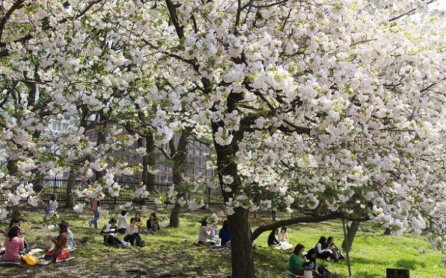 L hanami approda al parco del laghetto dell eur for Laghetto giapponese