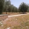 Parco viale Romanisti Torrespaccata degrado3