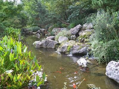 L 39 orto botanico di roma meraviglia della natura nel cuore for Laghetto giapponese