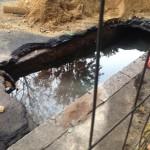 Perdita acqua lavori terna via bufalotta