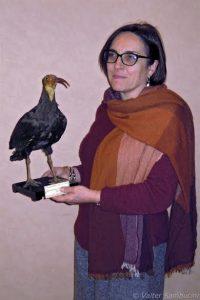 marangoni-con-ibis