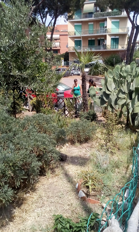 Un nasone per il giardino di via dei noci for Alberelli per giardino