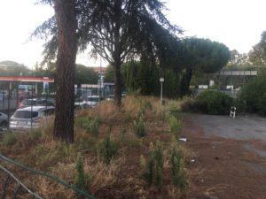 Degrado della piscina comunale di via Manduria